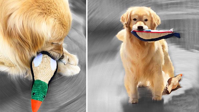 大型犬がおもちゃで遊ぶ様子